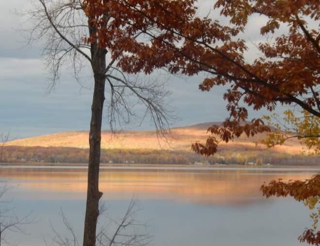 autumn light throuh the trees